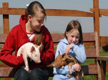 Hardy's Animal Farm in Skegness